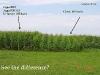 ks1515_corn2